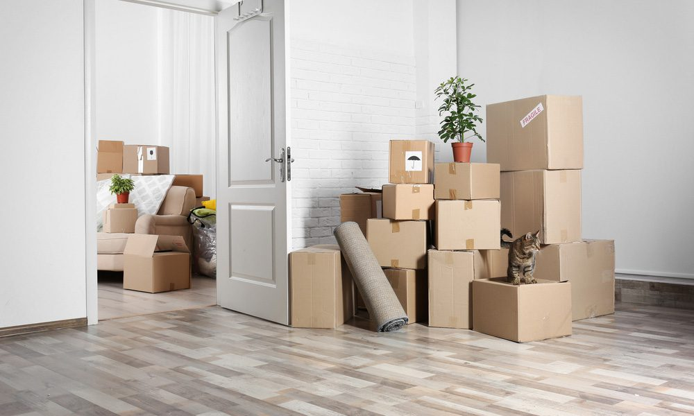 Moving Maids packing and cleaning NZ